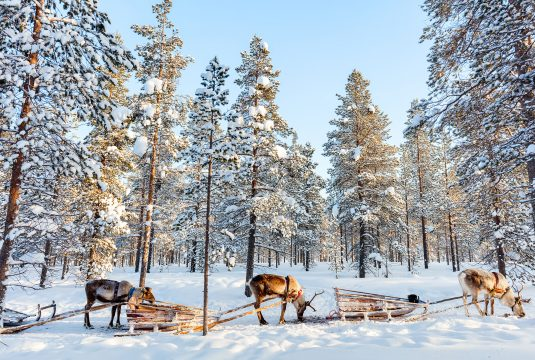 Lapland-Holiday-Experience-1
