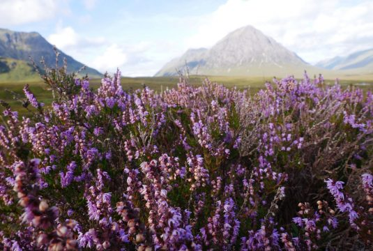 Experience Scotland in Full Bloom